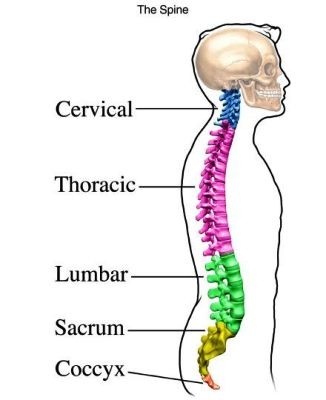 si1936 parts of spine